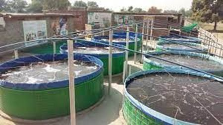 Picture for category Biofloc  Fish Farming